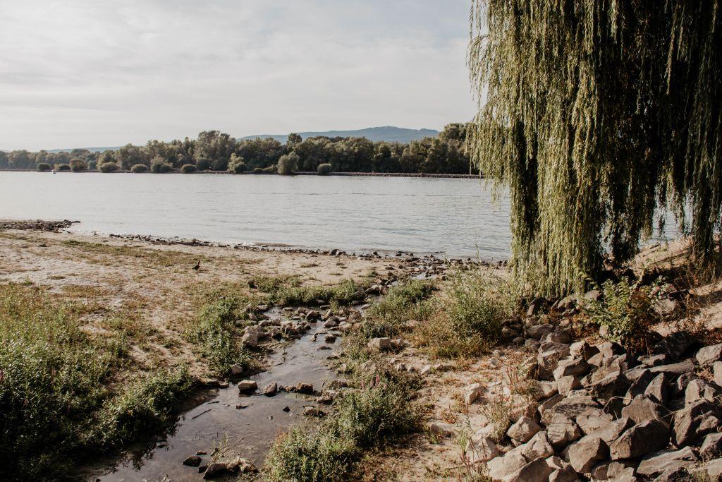 Heidenfahrt am Rhein