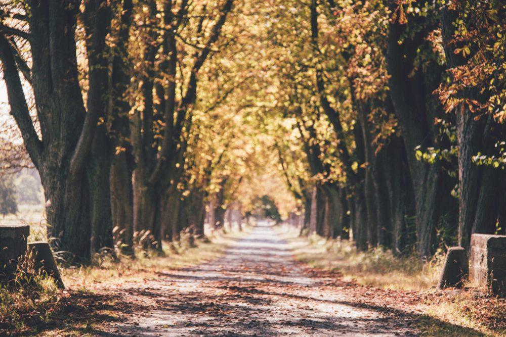 Rhein Main Gebiet - Ausflugstipps im Herbst llee im Mönchbruch