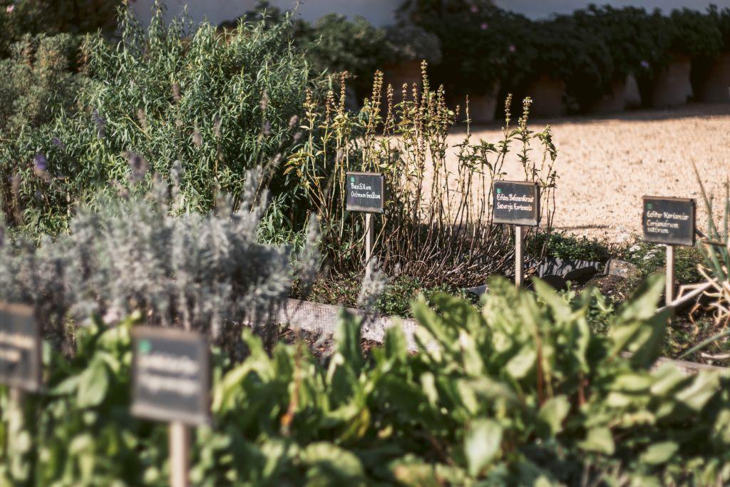 Kräutergarten im Klostergarten