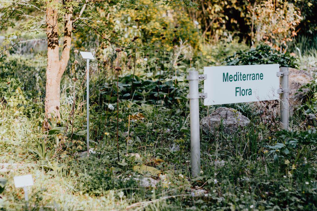 Mediterrane Flora Frankfurt